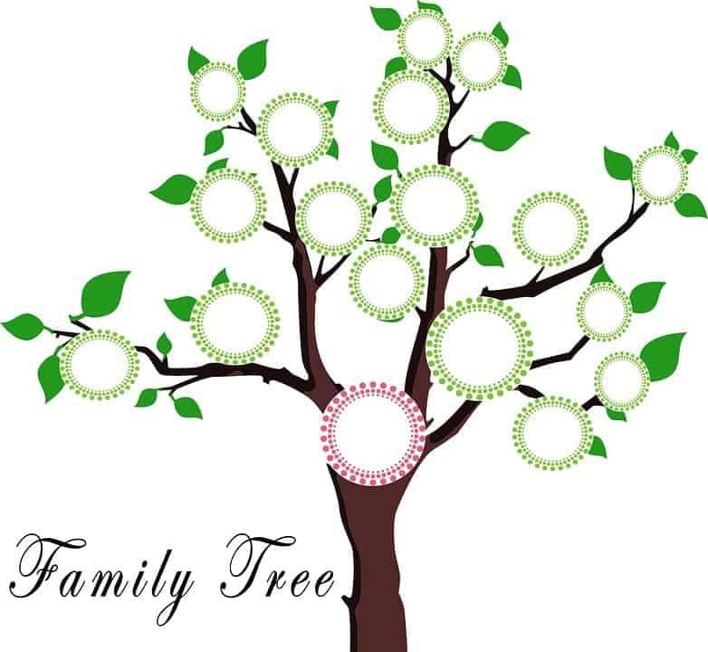 arbol genealogico (1)